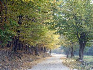 autumn-785501-m