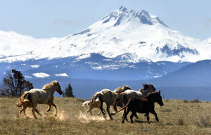 divite kone